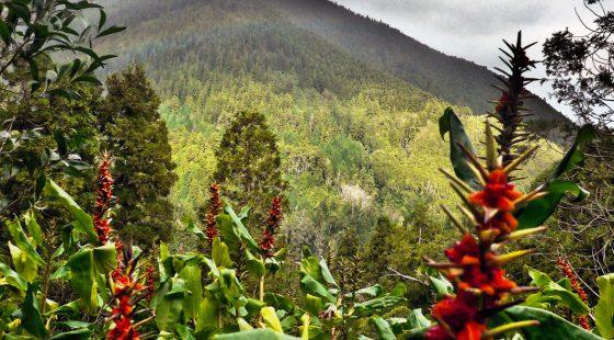 Azoren, Berge, Natur, Pflanzen, waldbrand media, stock images, kostenlose fotos, lizenzfreie fotos, free stockj images, wälder, wandern, berg