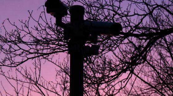kamera, äste, baum, brench, sunset, dawn, dusk, sonnenuntergang, dämmerung