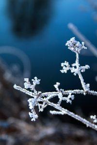 Gefrorene Gräser, Frost, Winter, Eiskristalle, frozen plants, frozen weeds, gefroren, eingefroren, free stock images, kostenlose fotos, ohne anmeldung, download, herunterladen
