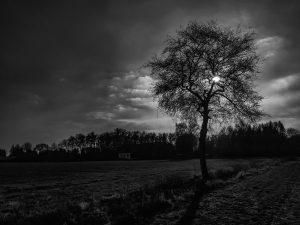 Baum, feld, acker, gegenlicht, silhouette, wolken, himmel, schwarz weiß, fotografie, lizenzfrei, bilder, fotos